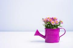 Fiore isolato in un barattolo di latta porpora Fotografie Stock Libere da Diritti