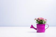 Fiore isolato in un barattolo di latta porpora Fotografia Stock