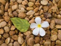 Fiore, leaf&pebble Fotografie Stock Libere da Diritti