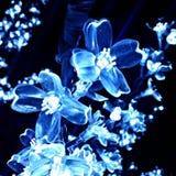 Fiore leggero blu Fotografie Stock Libere da Diritti