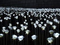 Fiore leggero nel parco Fotografia Stock