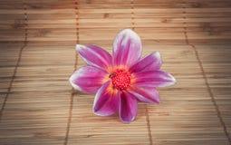 fiore Lillà-viola con il centro rosso e una mosca su un tovagliolo della paglia Fotografia Stock