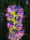 Fiore lilla Fotografie Stock Libere da Diritti