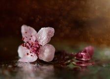 Fiore lilla alla luce di tramonto immagini stock libere da diritti