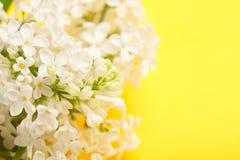 Fiore lilla bianco Fotografie Stock Libere da Diritti