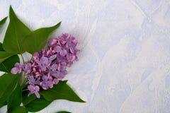 Fiore lilla blu Fotografia Stock Libera da Diritti
