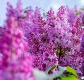 Fiore lilla Con il fondo del cielo Fotografia Stock