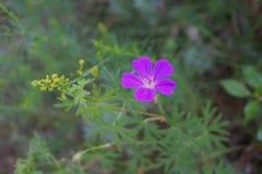 Fiore lilla con le foglie gialle e verdi Fotografie Stock