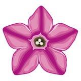 Fiore lilla di tabacco fragrante illustrazione di stock