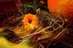 Fiore luminoso Fotografie Stock