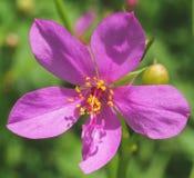 Fiore luminoso come un sole Fotografie Stock Libere da Diritti