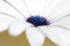 Fiore a macroistruzione Fotografia Stock