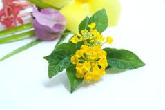 Fiore a macroistruzione 2 Fotografie Stock