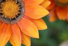 Fiore a macroistruzione Fotografie Stock