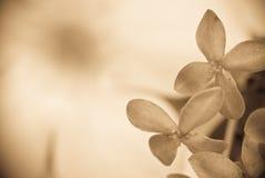 Fiore a macroistruzione Immagine Stock