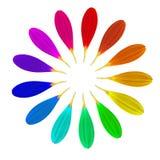 Fiore magico del tredici-petalo Fotografia Stock Libera da Diritti