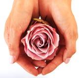 Fiore in mani femminili Immagine Stock
