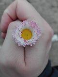 Fiore in mano della tenuta Fotografie Stock Libere da Diritti