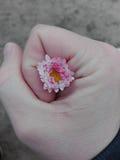 Fiore in mano della tenuta Fotografie Stock