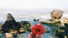 Fiore in mare Fotografia Stock Libera da Diritti