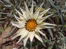 Fiore 1 fotografia stock libera da diritti