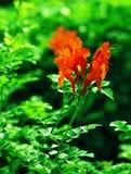 Fiore mediterraneo arancione immagini stock libere da diritti