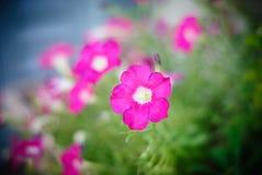 Fiore messo a fuoco con fondo nel bokeh Fotografie Stock Libere da Diritti
