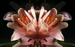Fiore misterioso Fotografia Stock Libera da Diritti
