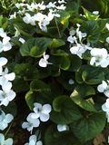 Fiore, molla, natura, bianca immagini stock