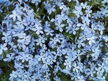 fiore, molla, natura, fiori, blu, pianta, croco, viola, giardino, flora, beaut fotografia stock
