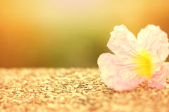 Fiore molle dolce di rosa del fuoco con effetto di luce solare Fotografie Stock