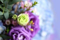Fiore molle e dolce Fotografie Stock