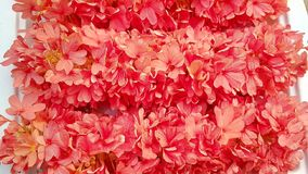 Fiore molto bello Immagini Stock