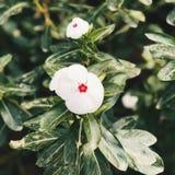 Fiore molto piccolo Fotografie Stock Libere da Diritti