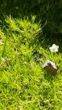 Fiore molto piccolo immagini stock libere da diritti