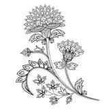 Fiore monocromatico disegnato a mano di contorno Illustrazione etnica di vettore Immagine Stock