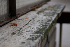 Fiore morto su un supporto di marmo Immagini Stock Libere da Diritti