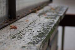 Fiore morto su un supporto di marmo Immagine Stock Libera da Diritti