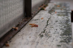 Fiore morto su un supporto di marmo Fotografie Stock Libere da Diritti