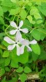 Fiore nascosto Fotografia Stock