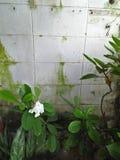 Fiore in natura Immagine Stock Libera da Diritti