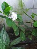 Fiore in natura Fotografie Stock
