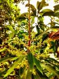 Fiore - natura & bello immagini stock