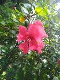 Fiore, natura, eco, colourofnature, primo piano fotografie stock libere da diritti
