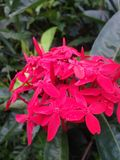 Fiore naturale Fotografie Stock Libere da Diritti
