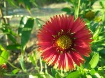 Fiore naturale Immagini Stock Libere da Diritti