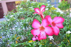 Fiore naturale Fotografie Stock