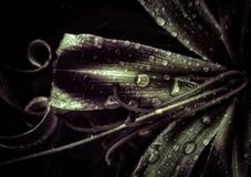 Fiore negli scuro fotografie stock