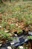 Fiore nei rifiuti Fotografia Stock Libera da Diritti