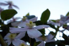 Fiore nel cielo Fotografia Stock Libera da Diritti